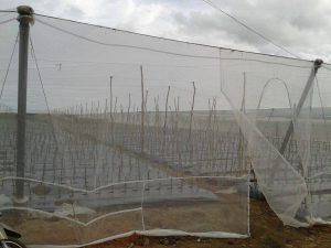 Lưới chống muỗi cho chuồng trại là gì? Vai trò và lợi ích mà nó đem lại
